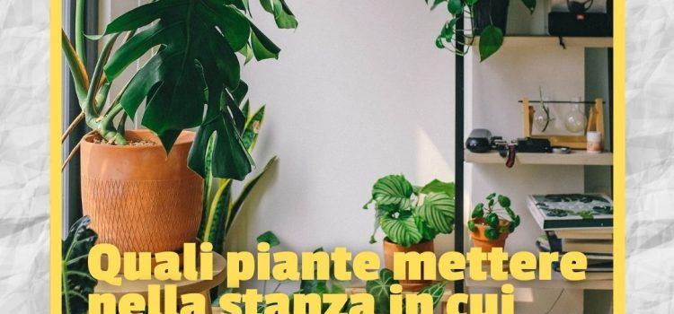 Quali piante mettere nella stanza in cui studiamo